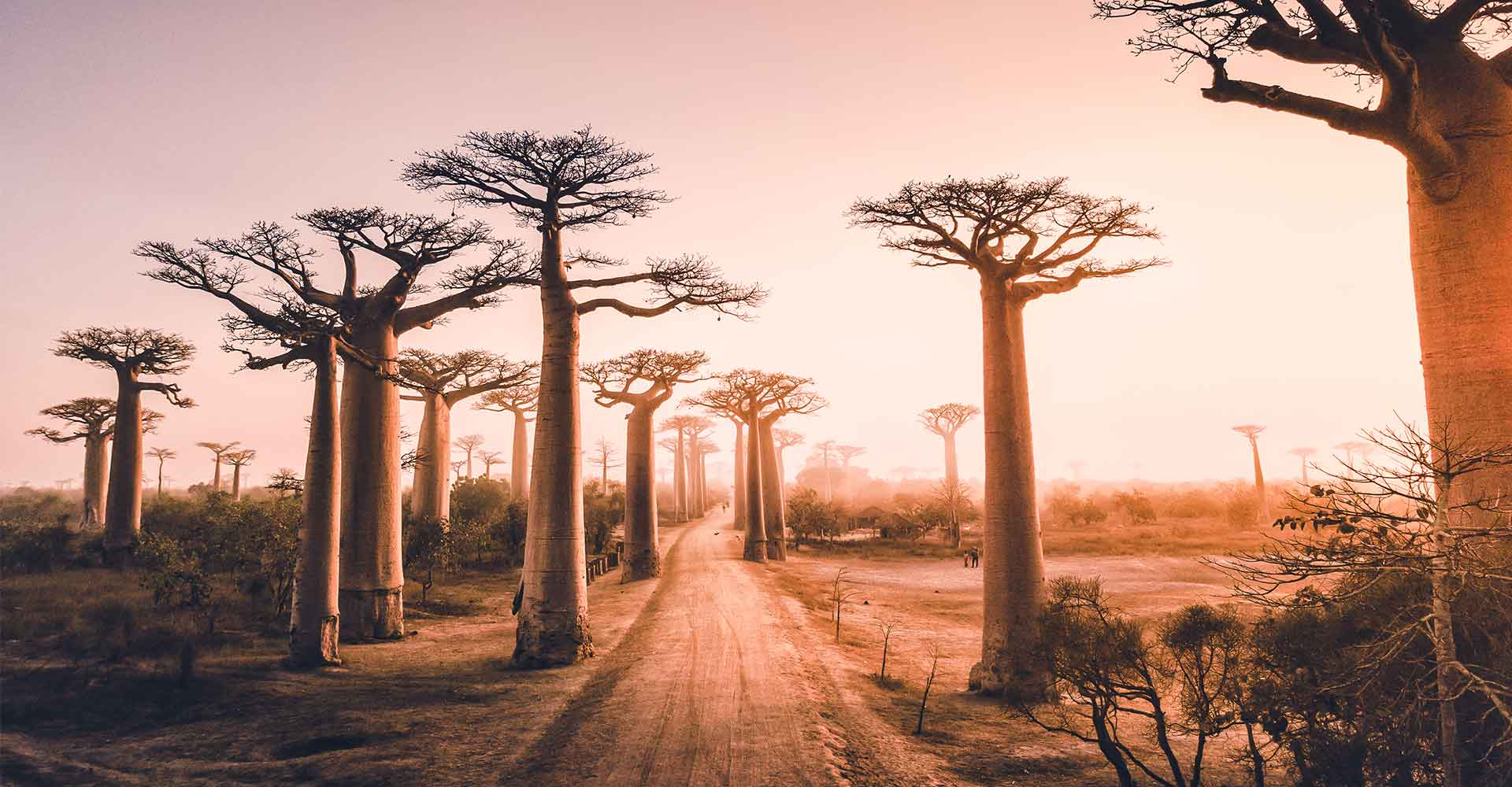 Banner image of Madagascar