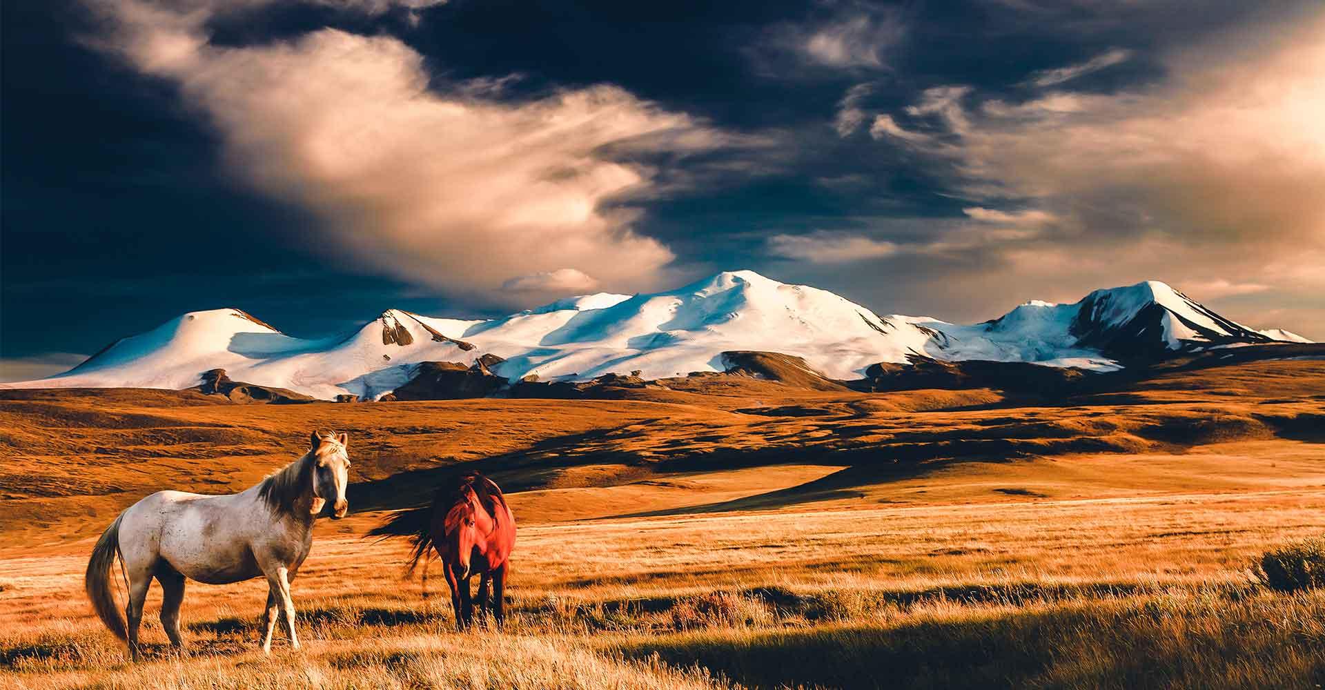 Banner image of Mongolia