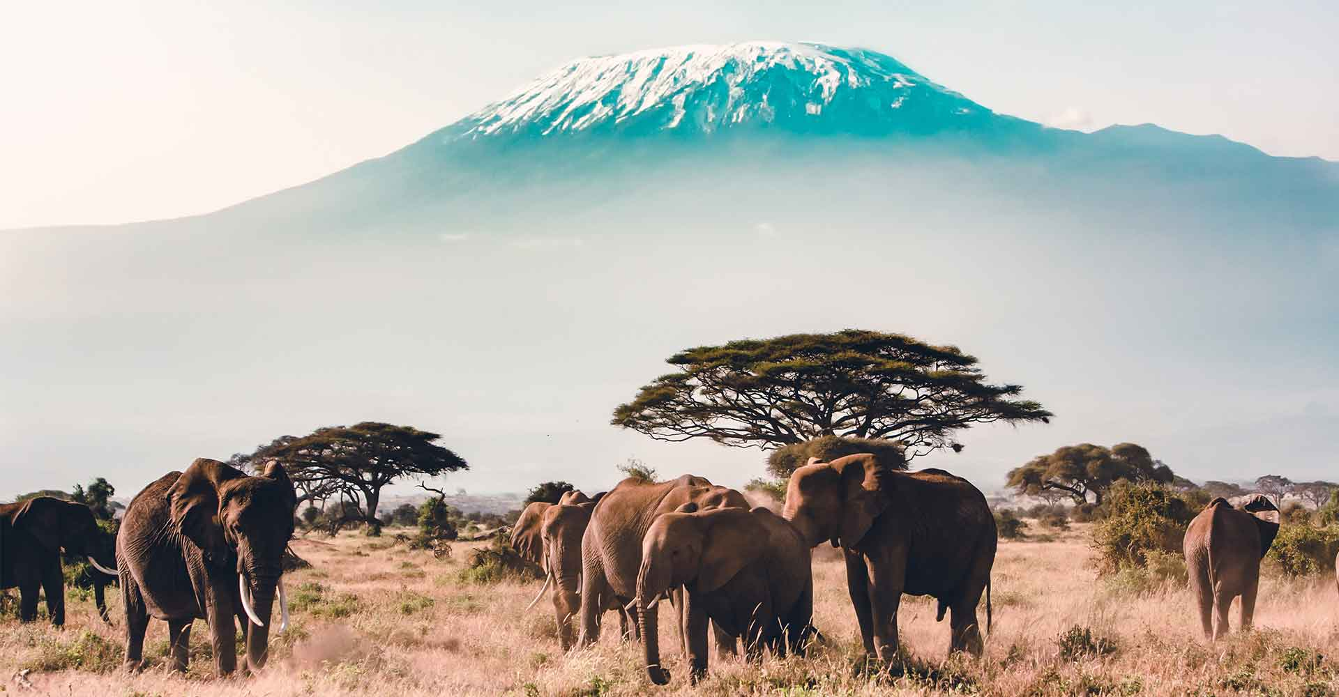 Banner image of Tanzania