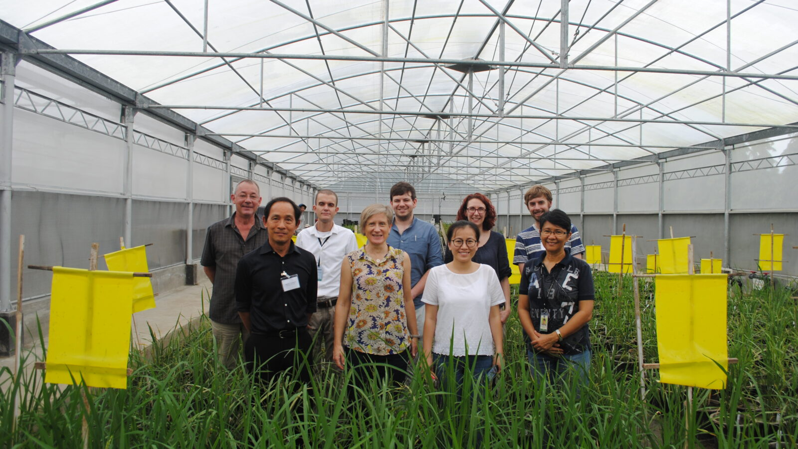 Team standing in rice greenhouse