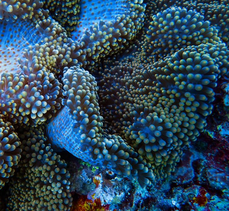 Phillippines marine life