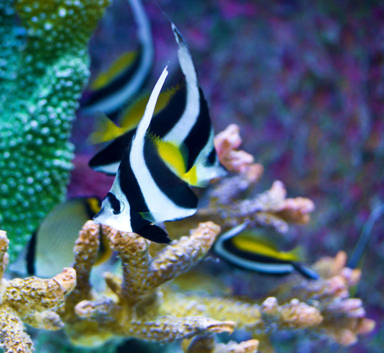 Philippines colourful fish